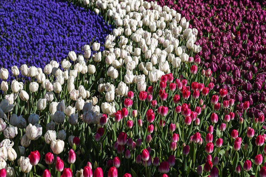Картинки по запросу Платье-тюльпан